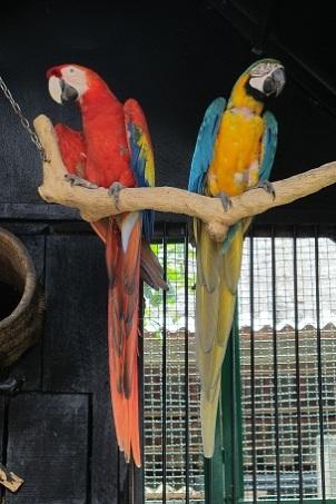 Two. Beautiful. Birds.